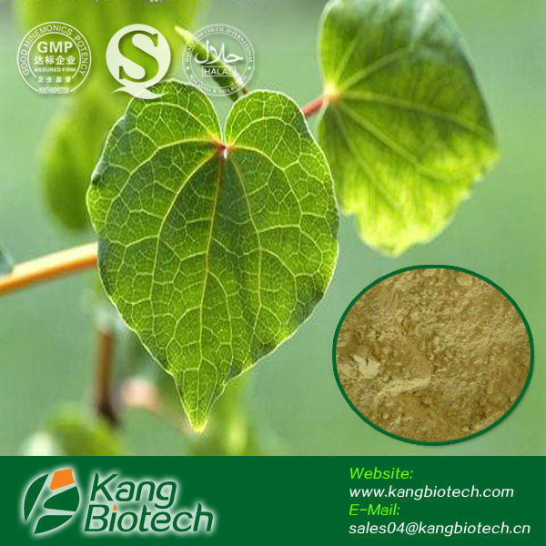 Solvent plant extract fiji kava powder kava root extract