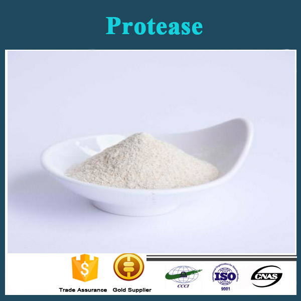 Professional Factory Supply Protease Amilase Bio Enzyme Alkaline Protease