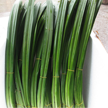 pure natural bulk pandan leaf extract powder 10:1 wholesale