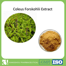 Natural Coleus Forskohlii Root Extract 2%-98% Forskolin Powder