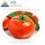 Hot sale 100% Natural Tomato Extract Powder Lycopene 5%-98% Solanum lycopersicum L