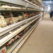 Commercial Layer Metal Chicken Cages For Poultry In Ghana Sale( A & H type layer chicken cage,good quality)