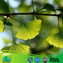 Ginkgo Biloba Extract Make Skin White
