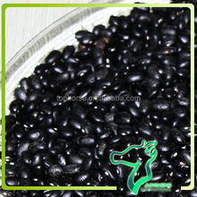 Black Matpe Beans, Black Beans Specification, 500-550pcs/100g