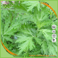 kosher&halal Wormwood leaf extract,Free Sample Available Fully High Quality Sweet Wormwood