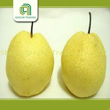 fresh fruit 2012 fresh ya pear
