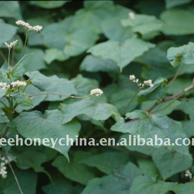 natural buckwheat honey