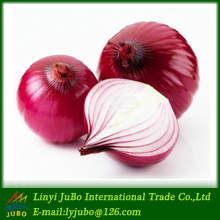 new crop 2016 fresh Red Shallot Onions