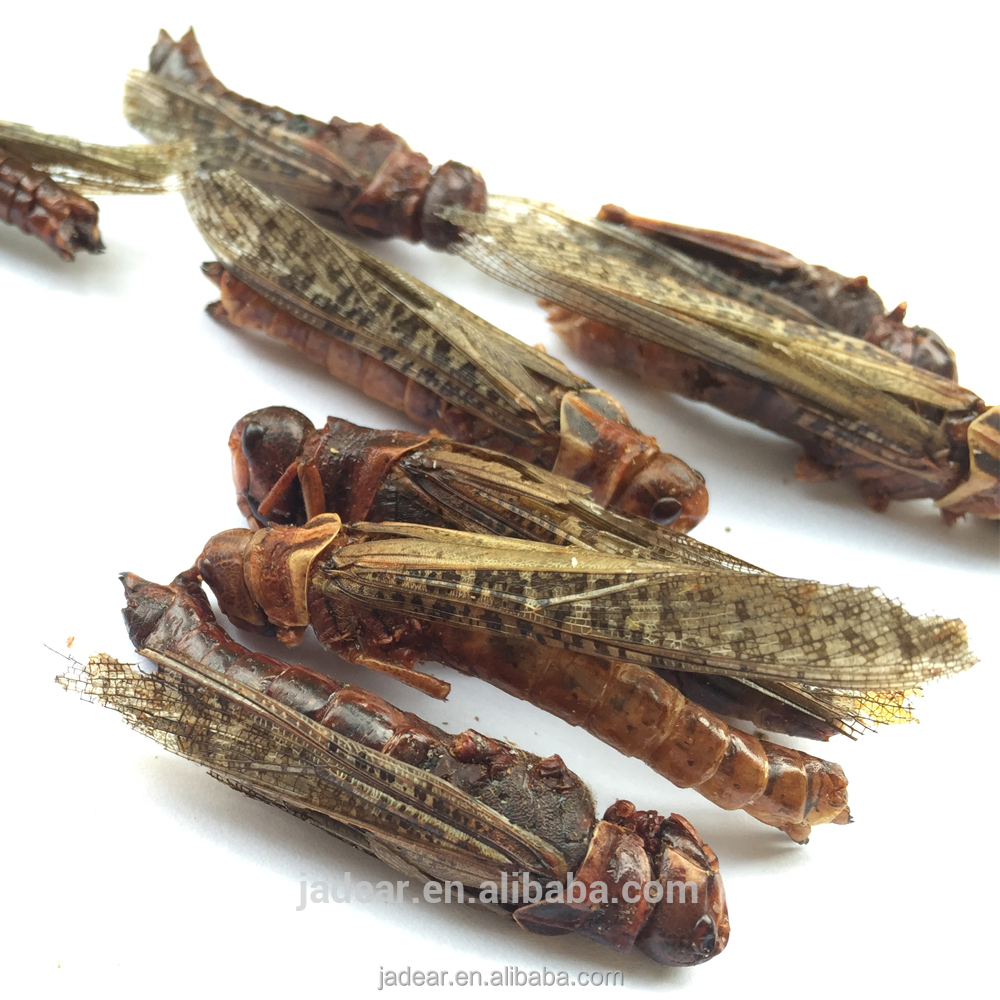 Wholesale Pet Food Freeze Dried Gammarus;Gammarus for pet food