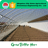 Wholesale Single Span Green House Agriculture