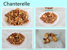 2016 Dried Chanterelles best price best quality from Yunnan ,China
