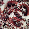 Frozen BQF Squid Tentacles