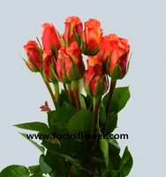 New style fresh cut garden roses roses and summer flowers golden rose with 20stems/bundle from focus/yunnan