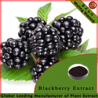 Cheap Price Blackberry Fruit Extract