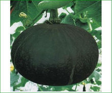 new high germination pumpkin seed/pumpkin seeds for sowing