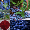 Lan Mei organic nature powder Wild Blueberry Extract