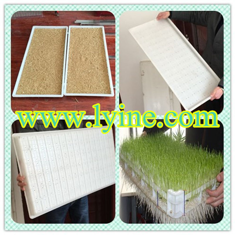 hydroponics barley sprout tray for sprouting barley fodder seeds / dairy feed breeding container with green tray