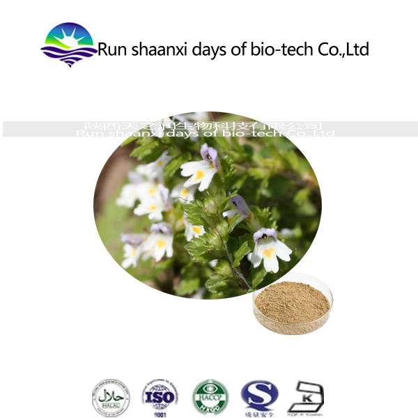 Kosher manufacture natural euphrasia officinalis extract/eyebright extract powder