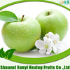 fresh fruit import red green fuji apple from china