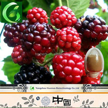 World Best Selling Products Raspberry Ketone treat sterility