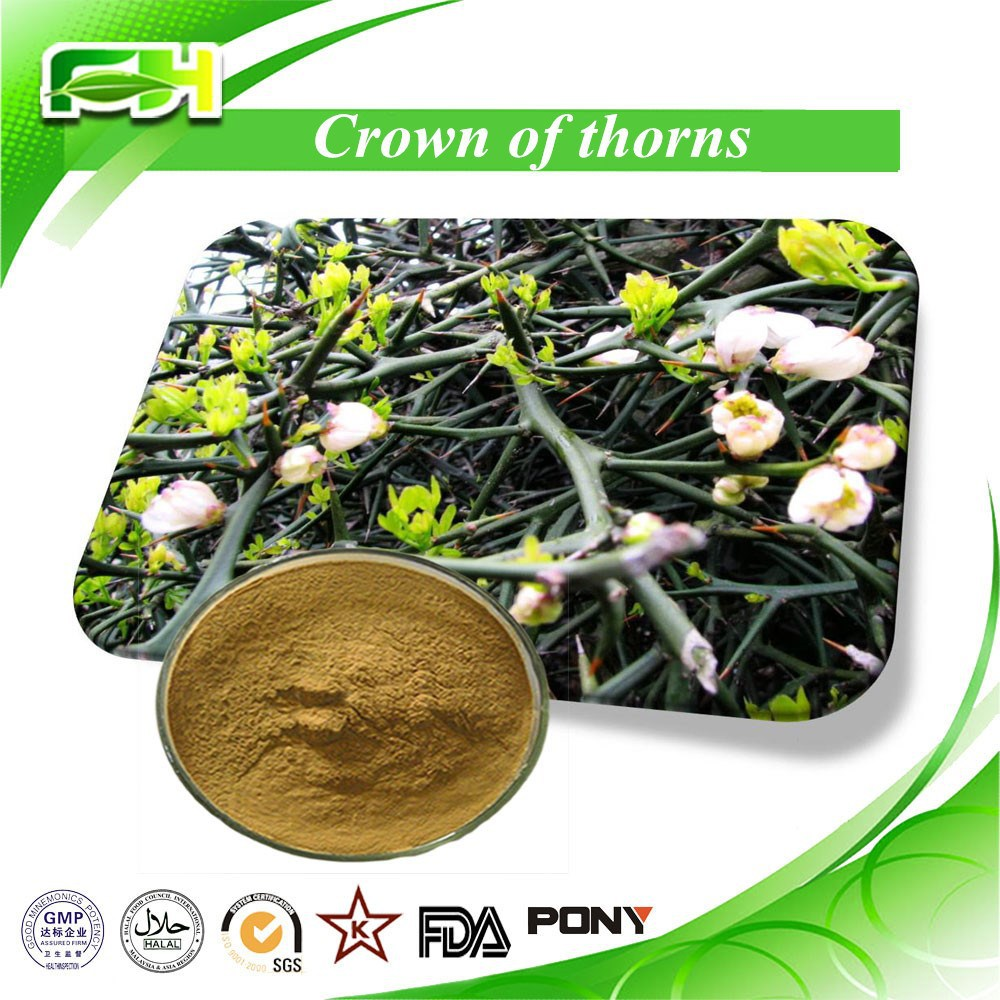 Pure Natural Plant Extract Crown of Thorns Extract