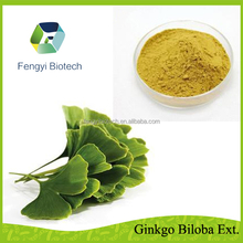 Natural herbal medicine Flavone glycoside 24% Terpene Lactones 6% plant extract ginkgo biloba extract powder with best price