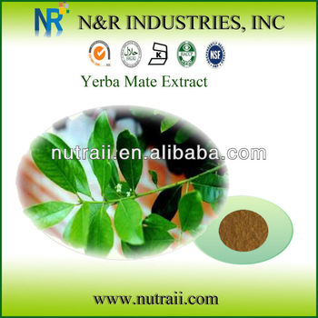High quality Yerba mate Extract powder 4:1/ 10:1/20:1