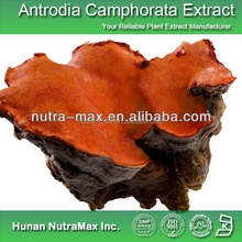 China Manufacturer Triterpenoid Antrodia Camphorata Extract Triterpene