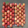 china fresh fuji apples seasonal fruits with low price