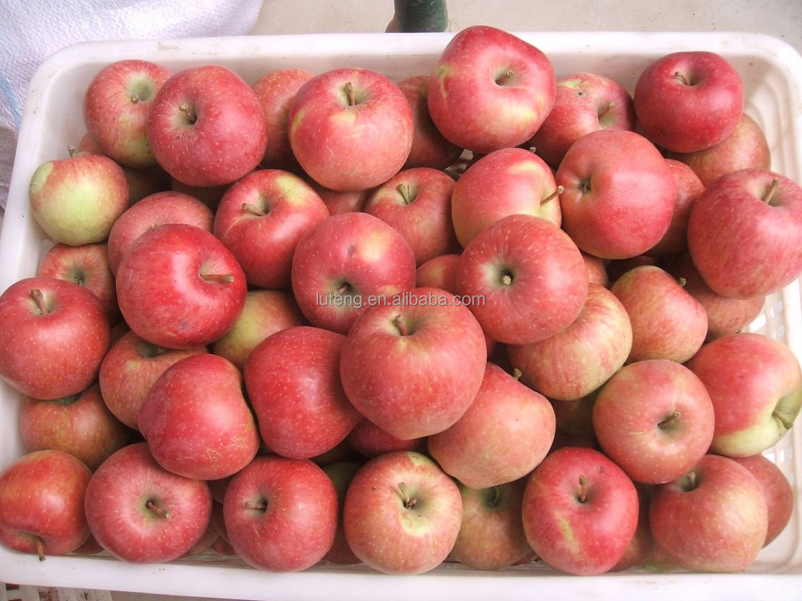 Bulk packing fresh red star apples from China for whole sale