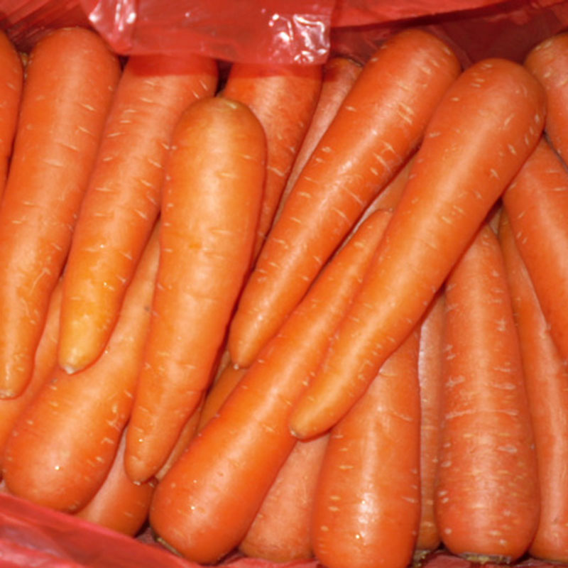 Whole price China bulk carrot