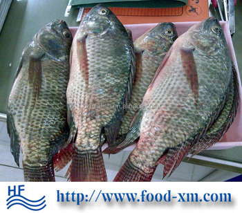 Tilapia Wholesale Price