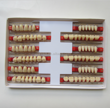 Good quality of 2 layer teeth acrylic teeth for dentures