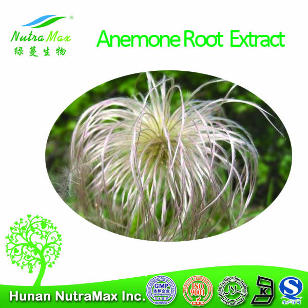100% Natural Anemone Root Extract/Pulsatilla chinensis extract