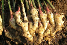 2016 bulk fresh ginger market price in China