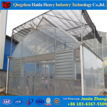 Low cost clearly agricultural Plastic Film Greenhouse used for rose growing