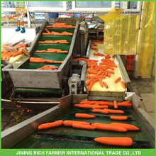 Chinese Fresh Carrot Manufacture