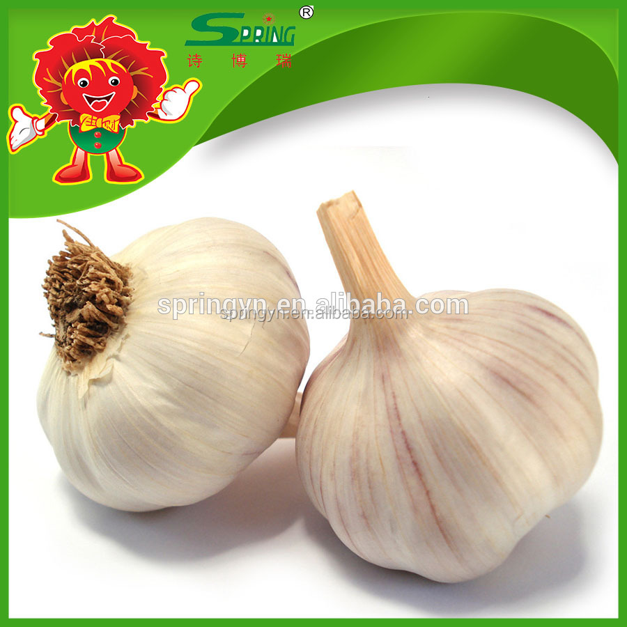 chinese cheap garlic wholesale garlic 5.0-6.0cm garlic exporters china