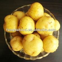 direct chinese potato fresh factory