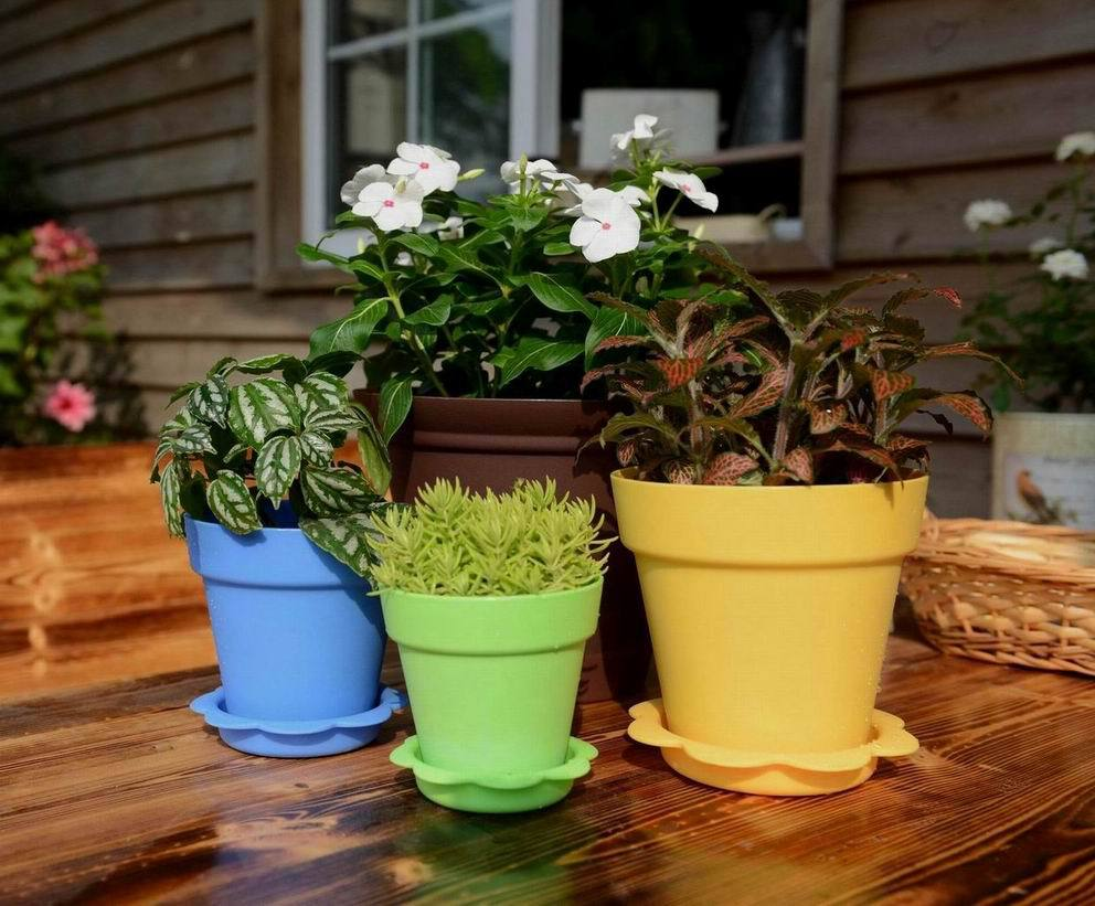 Colorful succulent plants plastic flower pot seeding pot gardener indoor vegetable garden buy - Indoor colorful plants ...