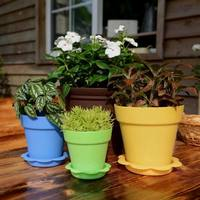 Colorful Succulent Plants Plastic Flower Pot