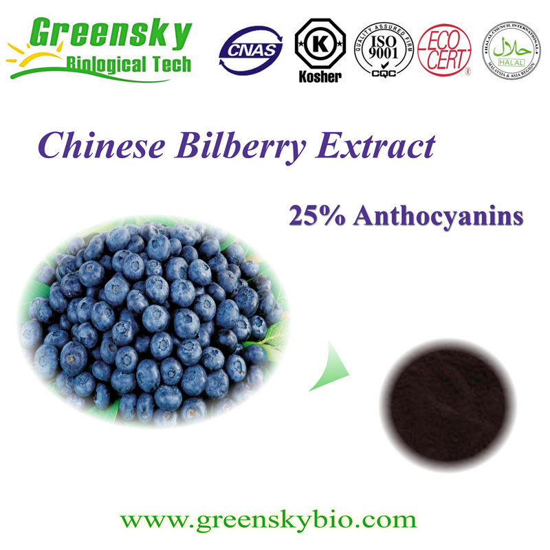 Factory Bilberry P. E plant extract powder with 25% Anthocyanin