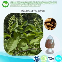 Thunder God Vine Extract/Lei Gong Teng extract Powder/thunder god vine root powder