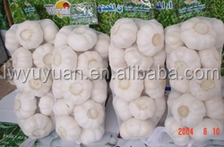 YUYUAN brand hot sail fresh garlic fresh garlic for sale