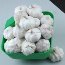 China best price loose packing pure white garlic