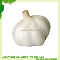 Chinese natural garlic hot sale price