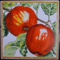 4X4 TERRA APPLES CERAMIC TILE