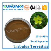 Best sale product natural tribulus terrestris extract powder 60% / saponins 60%