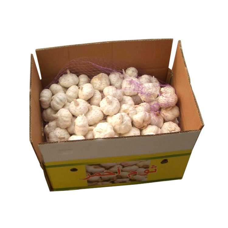Good quality agricultural product snow white garlic with low price