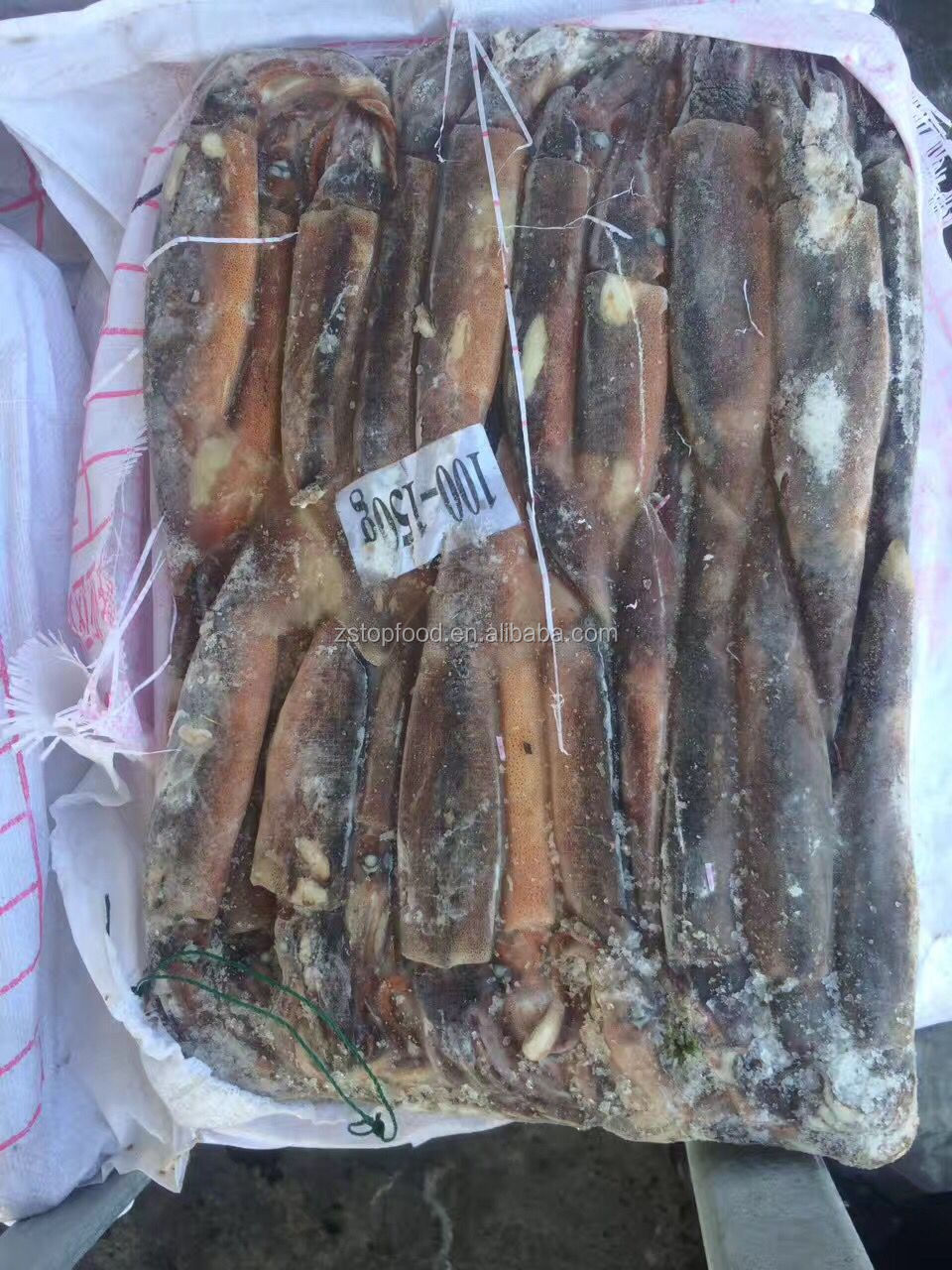 high quality new arrival frozen argentina squid